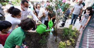 Beyoğlu Mahalle Bahçeleri'ne Bir Bir Kavuşuyor