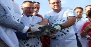 Tedavisi Tamamlanan Deniz Kaplumbağaları Denize Salındı