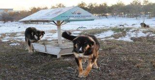 Büyükşehir Belediyesi Yaban Ve Sokak Hayvanlarını Unutmadı