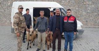 Jandarmadan Hayvan Hırsızlarına Operasyon