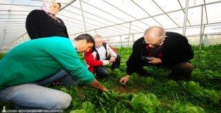 Organik Tarıma Orijinal Destek