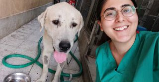 Umut kesilen köpeği Büyükşehir veterinerleri hayata döndürdü
