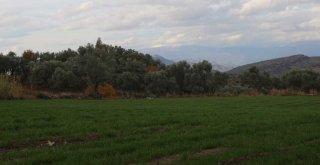Büyükşehir iklim dostu yem bitkileriyle su kaynaklarının verimli kullanılmasını sağlayacak