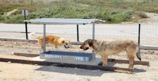 Mudanya Belediyesinden Sahipsiz Hayvanlara Besleme Noktası