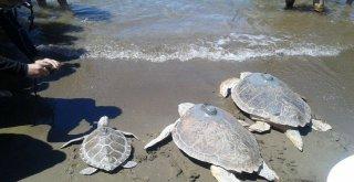 Deniz Kaplumbağaları Araştırma Merkezinin Kapanacağı İddiası