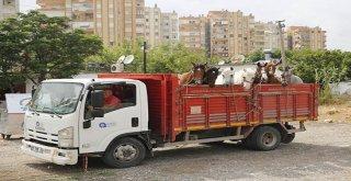 Antalyada Fayton Faaliyetleri Sona Erdi