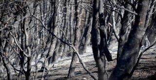 Vali Küçük: Yangın Sigara İzmariti Veya Cam Kırığından Çıkmış Olabilir