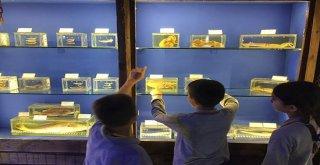 Antalyanın Deniz Yaşamı Bu Müzede
