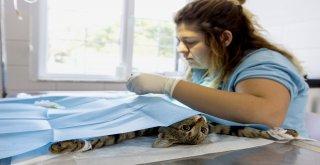 Minikler Sokak Hayvanlarının Kalp Atışlarını Dinledi