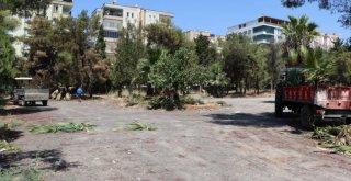 Yeşildirek Kentsel Dönüşüm Projesi İçin Bölgedeki Ağaçlar Naklediliyor
