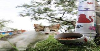 Mudanyada Sokak Hayvanları İçin Mamamatik