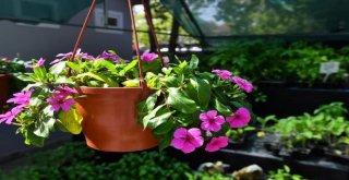 Başkentin Çiçek Evi
