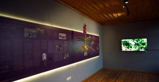 Büyükşehirden En Tatlı Müze: Dondurma Müzesi