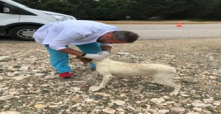 Sahipsiz Köpeklere Parazit Bakımı