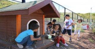 Minikler, Bakıma Alınan Sokak Hayvanlarını Sevdi