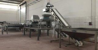 Burhaniye Zeytincilik Osbde İlk Fabrika Kuruldu