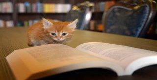 Kedili Tekke Millet Kıraathanesine Yoğun İlgi