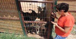 Çeşmede Sokak Hayvanları Sahipsiz Değil