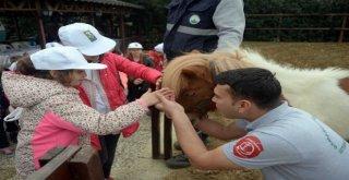 Osmangaziden Sokak Hayvanlarını Koruma Günü Etkinliği