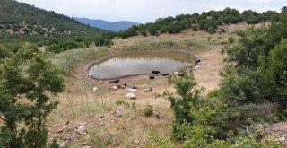 Büyükşehir'den 10 yeni hayvan içme suyu göleti