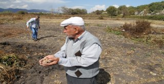 Yanan Toprak Görenleri Şaşırtıyor