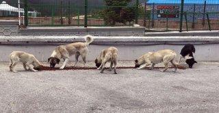 Osmangaziden Sokak Hayvanlarına Şefkat Eli