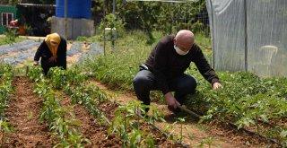 65 Yaş Üstü Tuzlalılardan, İhtiyaç Sahiplerine Organik Sebze Meyve Şöleni
