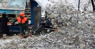Kar Yağışı Sonrası Kırılan Ağaçlar Kaldırılıyor