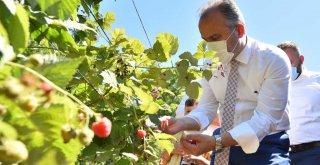 Büyükşehir destekliyor, çiftçi kazanıyor