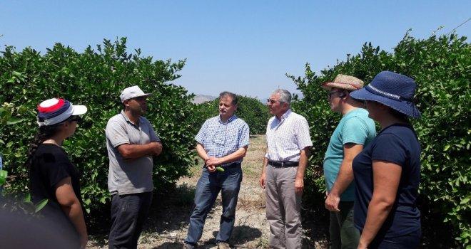 Aydında, Akdeniz Meyve Sineğine Karşı Önlemler Arttırıldı