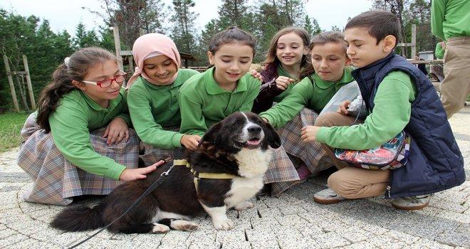 İbb, Bahçemde Sevgi Projesiyle Çocuklara Sokak Hayvanları Bakımı Eğitimi Veriyor