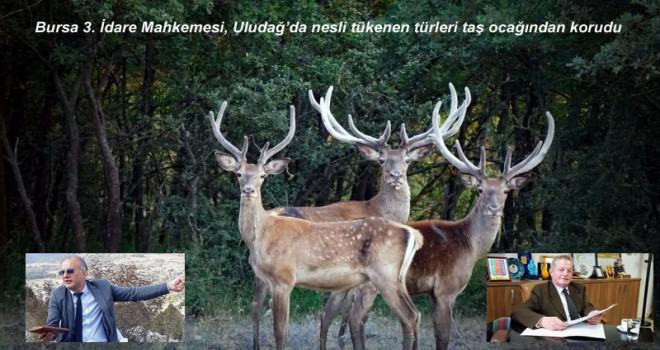Uludağ'da nesli tükenen canlılara koruma