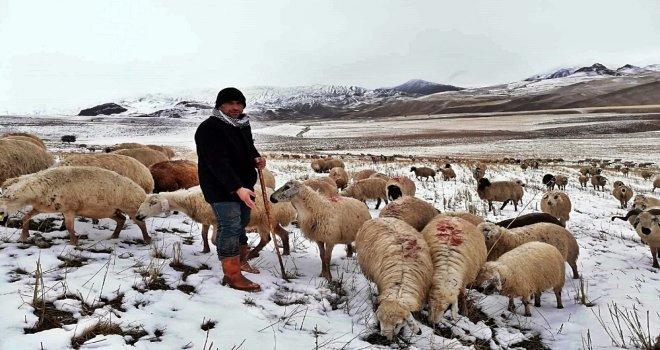 Erzincanda Kar Nedeniyle Koyun Sürüleri Yaylada Mahsur Kaldı