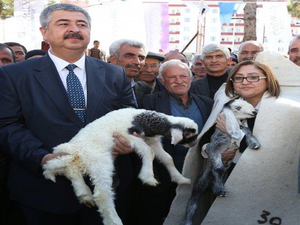 Gaziantep Büyükşehirden Üreticiye  Destek!
