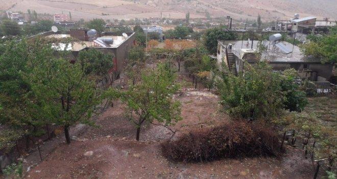Siirtte Sağanak Yağış Ekinlere Zarar Verdi