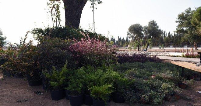 Dokumaya Botanik Bahçe Kuruluyor
