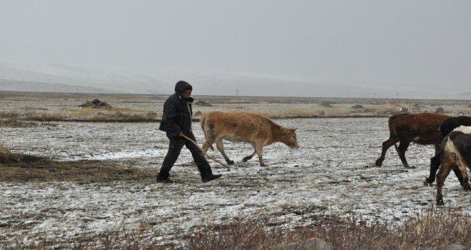 (Özel) Karsta Kar Ve Tipiye Yakalanan Çobanlar Zor Anlar Yaşadı
